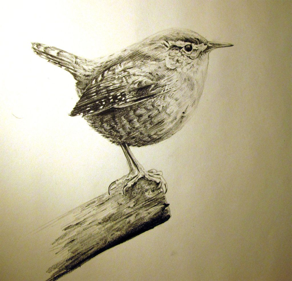 jenny wren by on deviantart tattoo pinterest tiny tattoo art and by. Black Bedroom Furniture Sets. Home Design Ideas