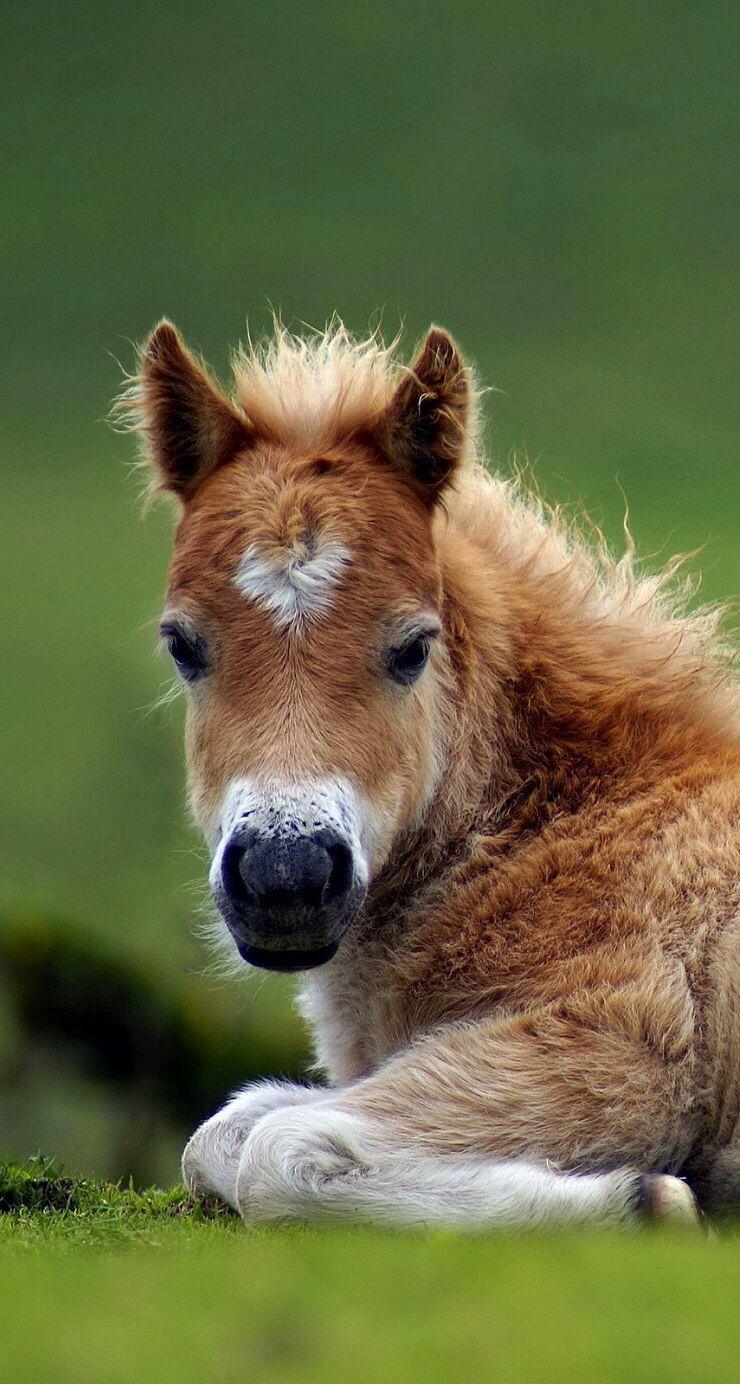 Schattig veulentje! - Lente | Pinterest - Paarden en Dieren