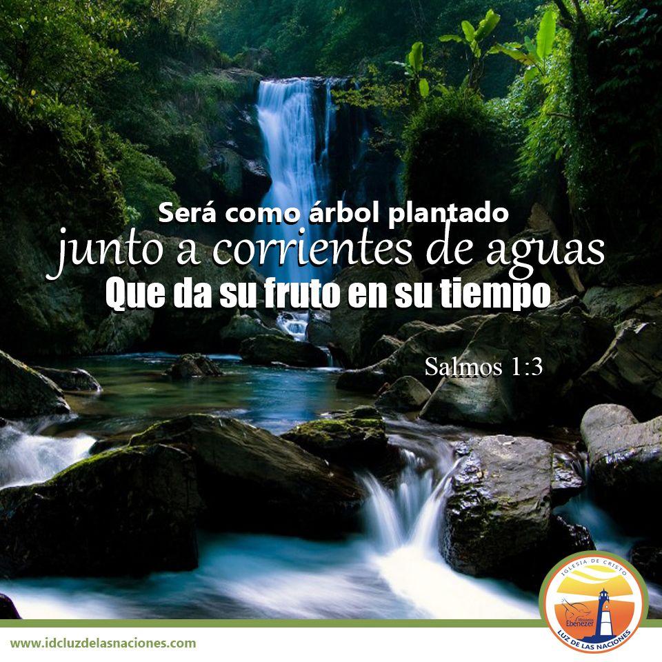 Ser como rbol plantado junto a corrientes de aguas que for Arboles que no pierden sus hojas en otono