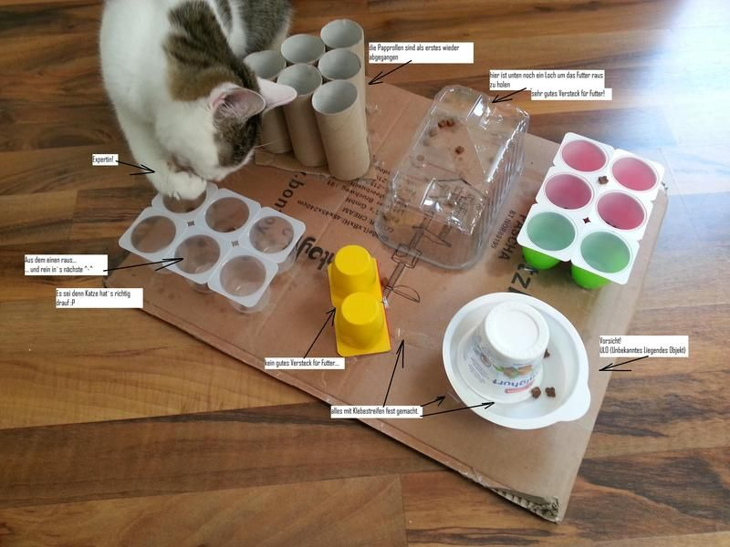 подлое трудотерапия для кошек кошки Fummelbrett Katze
