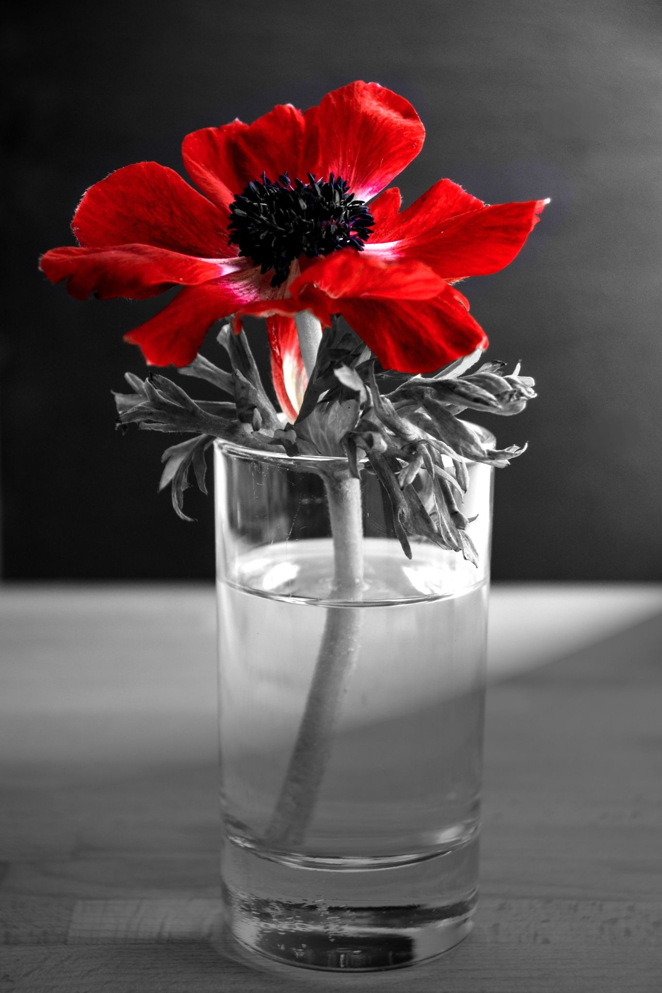 Blood Of Adonis by Anna Wacker on 500px .......Red anemones ...