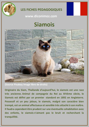 Fiches Chat Pdf 3 700 Fiches Animaux A Decouvrir