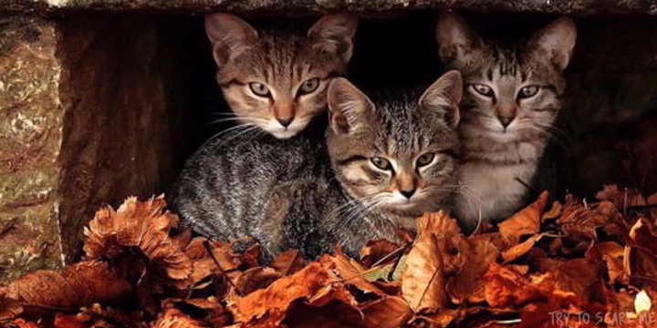 Like if your pet enjoys #Fall and #Halloween