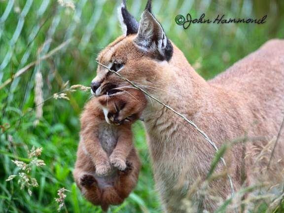 Persian Cat Rescue Rochester Ny