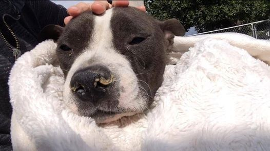 A dog named Sue: Animal advocates rally around dog left untreated at shelter