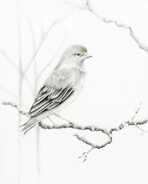 Realistic Pencil Drawings of Birds - Fine Art Blogger ...