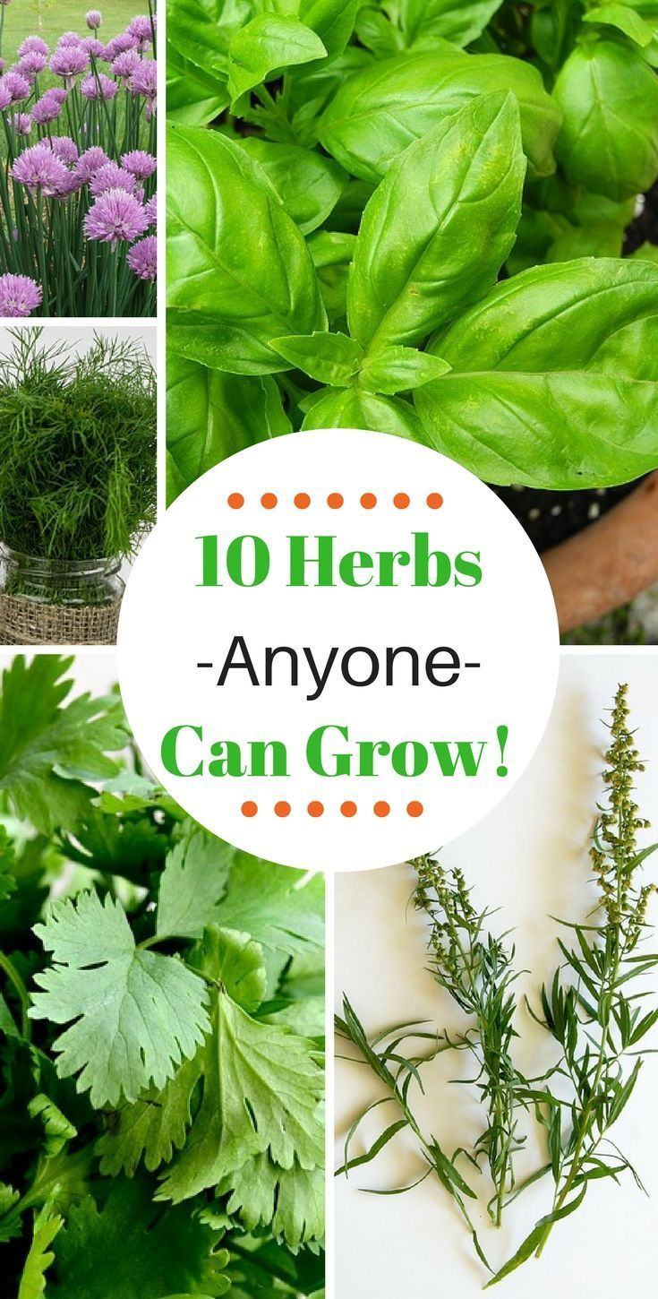 10 Herbs That Are Super Easy To Grow Vegetable Garden 640 x 480