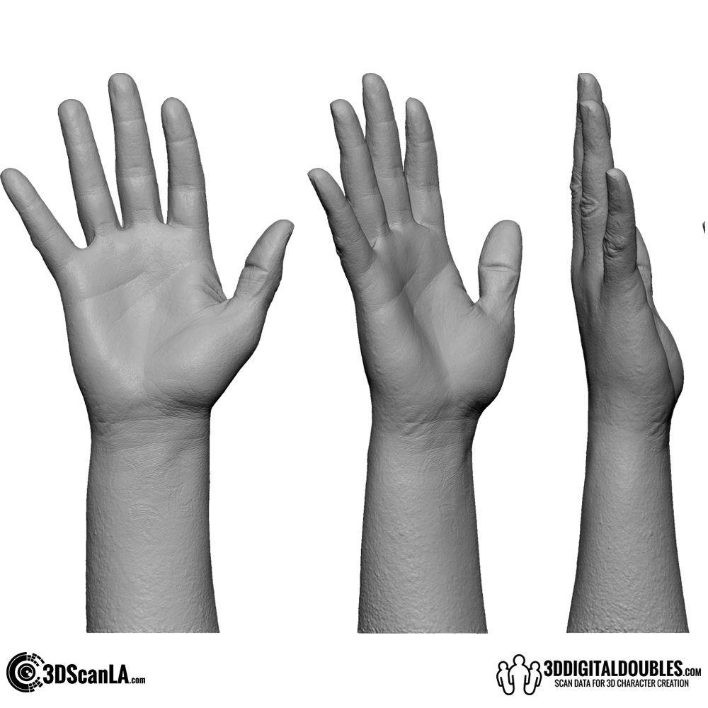 3D Hand Scan 01-03 | Pinterest | Anatomía humana, Anatomía y Dibujo