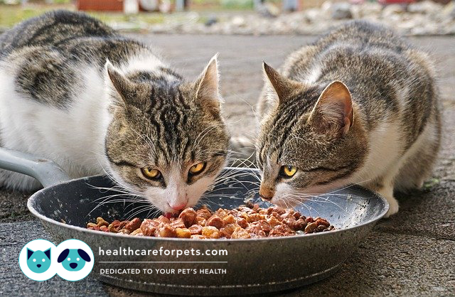 Should I Feed My Cat Both Wet And Dry Food Is It Necessary To Give My Cat Salmon Oil Healthcare For Pets Cat Food Wet Cat Food Pet Diet