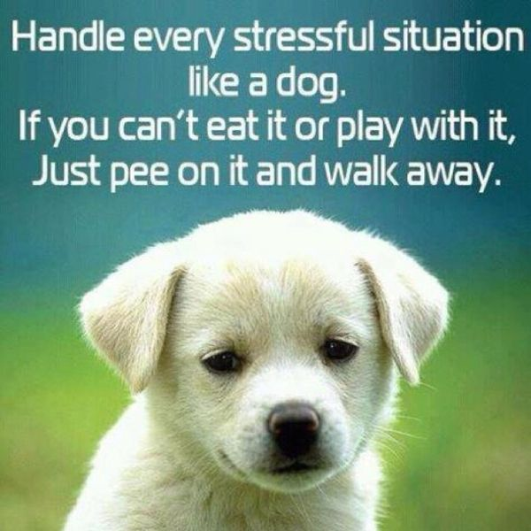 This One Makes Me Smile Funny Animals Cute Animals Cute Dogs