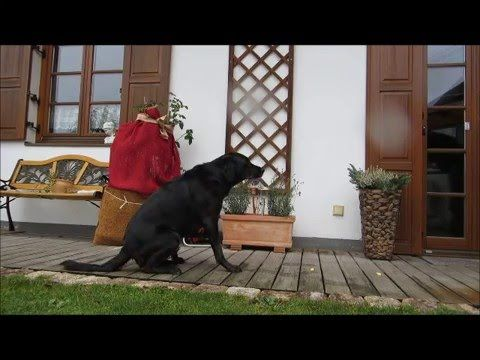 Dem Hund das Abruchsignal NEIN beibringen , Teach the dog the command NO