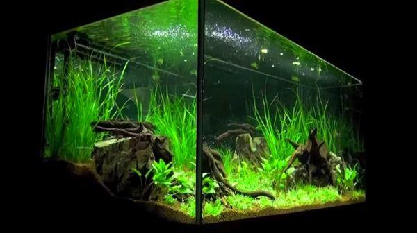 29 Gallon Fish Tank Beautiful Planted Aquarium Landscape