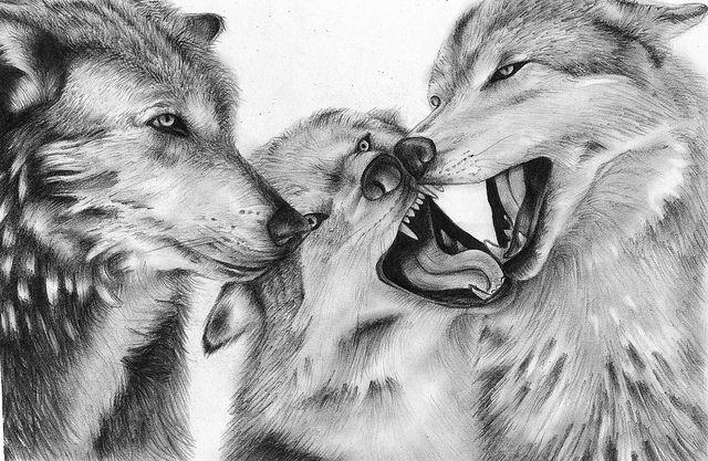 585896694 wolf eyes - Google Search | Art Insp | Wolf eyes, Wolf, Drawings