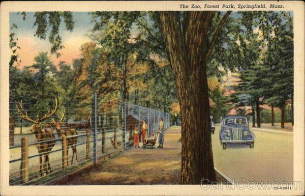 Linen postcard Massachusetts Scene in University Park Worcester