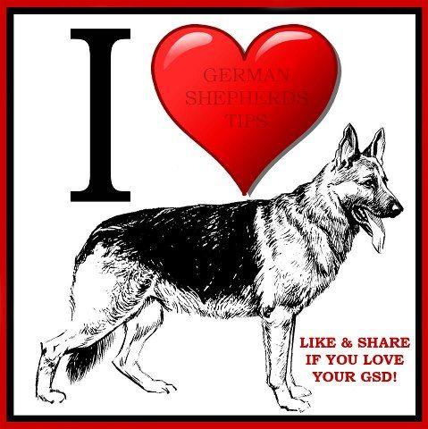 "love my german sherpard:) happy Tuesday from your friends at k9katelynn:)Phoenix dog training ""k9katelynn"" see more about Scottsdale, Gilbert dog training at k9katelynn.com"