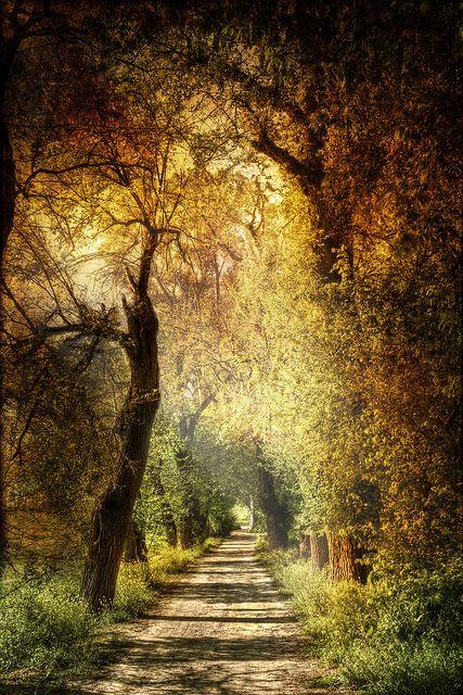 Mystic path. Sendero mistico.