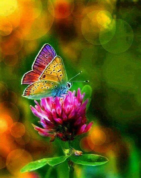 Rainbow butterfly! what a beauty!