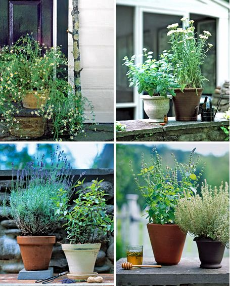 Medicinal Herb Garden and Uses