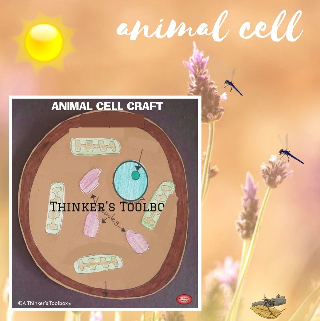 Animal Cell Craft In