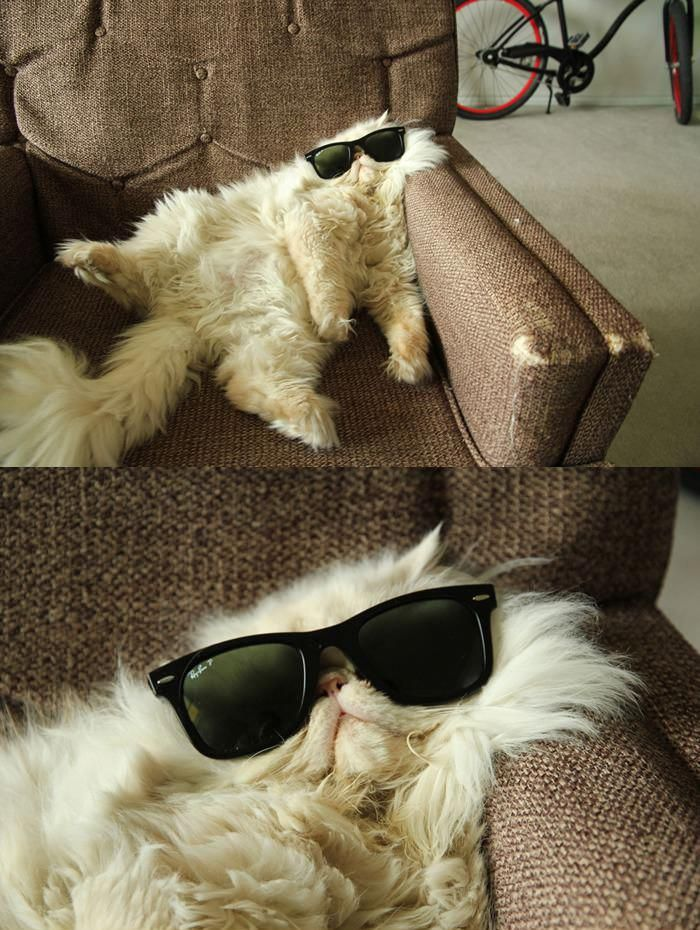 Chilling cat chilling