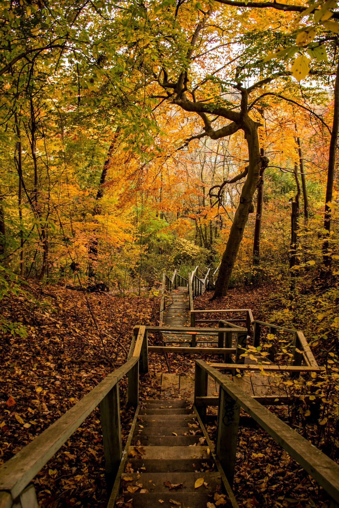 Autumn has reached Toronto. Autumn scenery, Golden