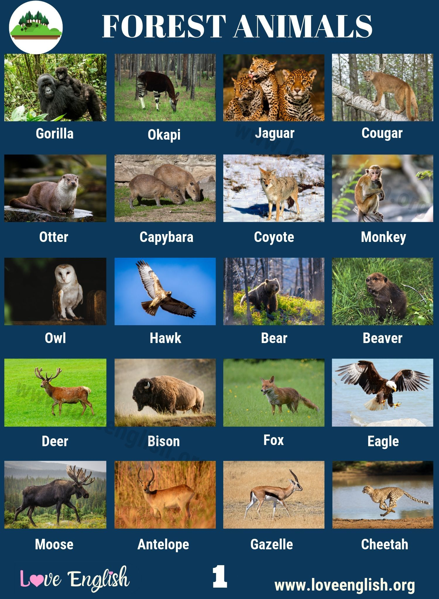 Forest Animals 40 Common Names of Animals in the Forest