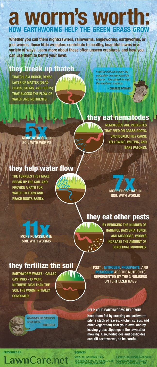 Link Infographic Why Earthworms Are Worth Keeping Around Worms Fertilize Soil Naturally They Re The Best Garden Helpers For More Gr