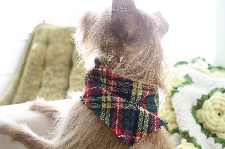 No sew bandana for pets
