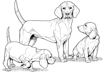 Dog Coloring Pages By Yuckles Puppy Coloring Pages Dog Coloring Page Animal Coloring Pages