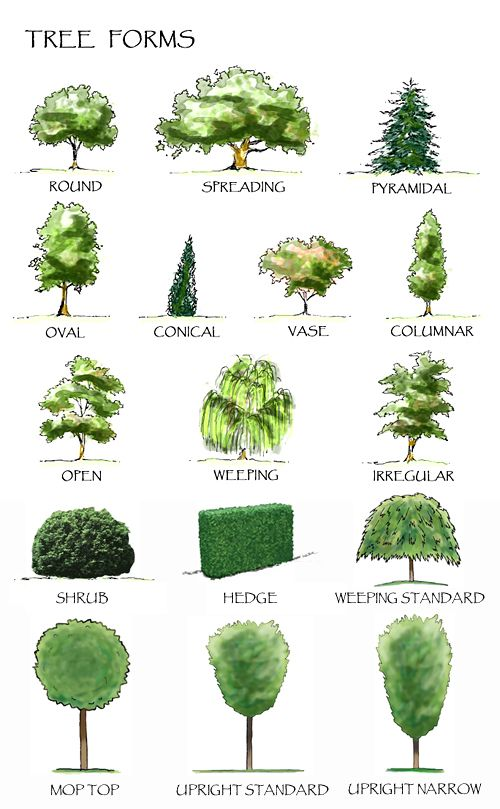 Using The Right Plants In Your Landscaping Landscape Sketch