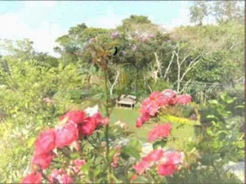 Muchas Veces En Nuestras Vidas Tenemos Una Flor Que Nos Cuida Cada Día Que Aveces No Le Damos El Valor Que En Realidad Tiene Som Jardín De Rosas Rosas Jardines
