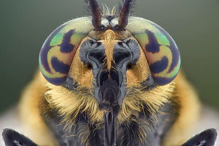 Insecto.