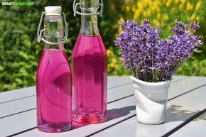 7 LavendelRezepte, um die Blüten fürs ganze Jahr zu konservieren is part of Lavender recipes, Growing lavender, Lavender plant, Lavender, Diy natural products, Bottles decoration - Lavendel gehört zu den vielseitigsten Gartenkräutern  Verwende ihn zum Beispiel für tolle Desserts, Naturkosmetik oder als wohlriechendes Mittel gegen Mücken