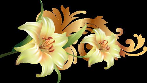 سكرابز ورود بخلفيه شفافه ورود للتصميم 3dlat Net 02 17 Cd4f Small Flowers Flowers I Wallpaper