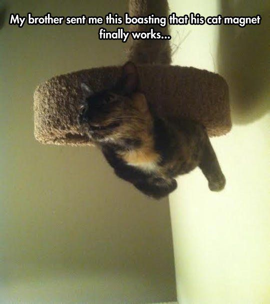 The Power Of The Cat Magnet