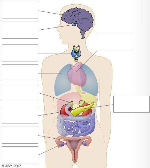 Free Diagrams Human Body | Human Body Diagram Blank | The Human ...