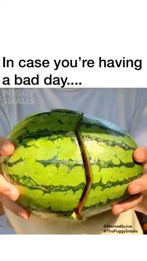 I Think That Watermelons Gone Bad Animals Funny Animal Videos