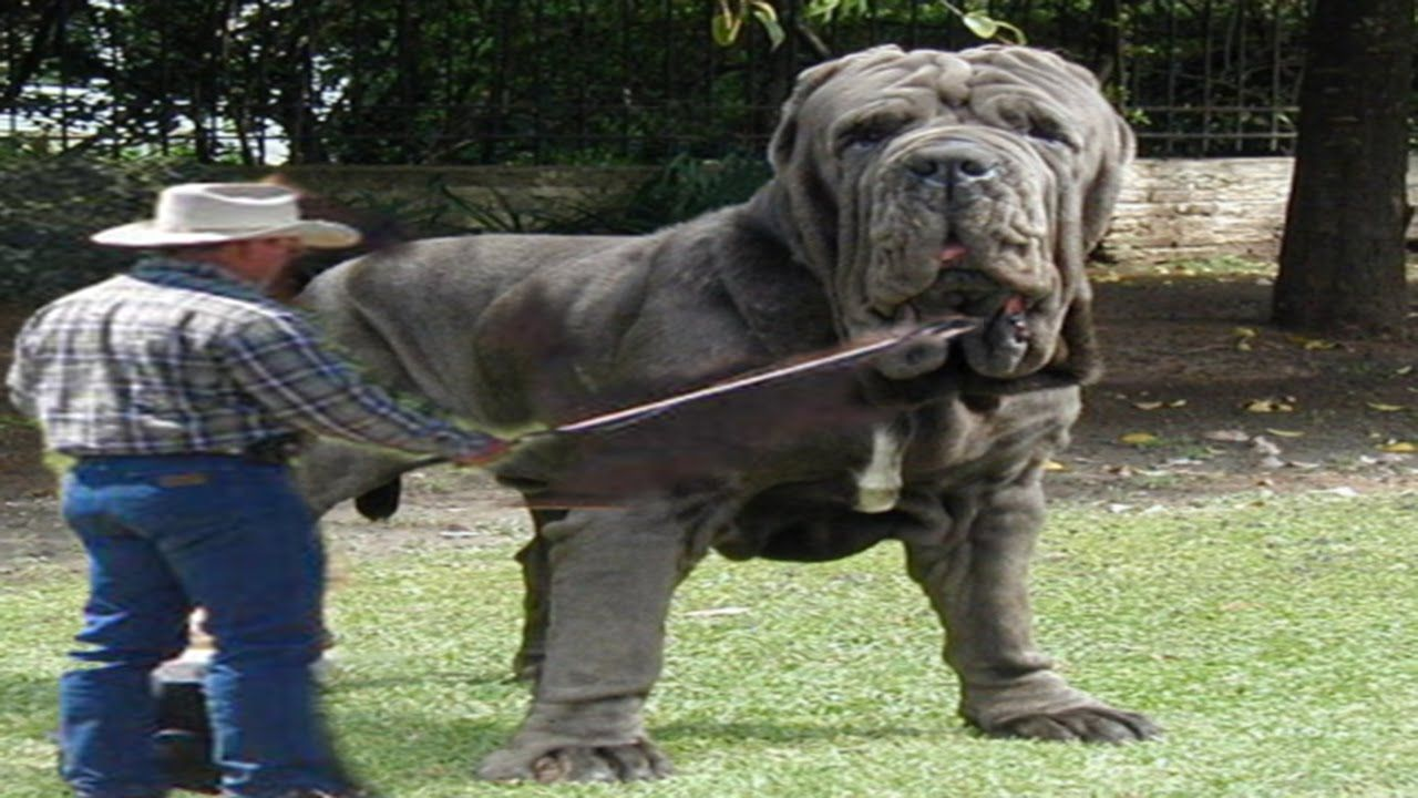 Top 10 biggest guard dogs in the world caucasian for What are the best dogs in the world