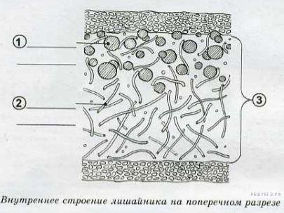 решу впр русский язык вариант 4