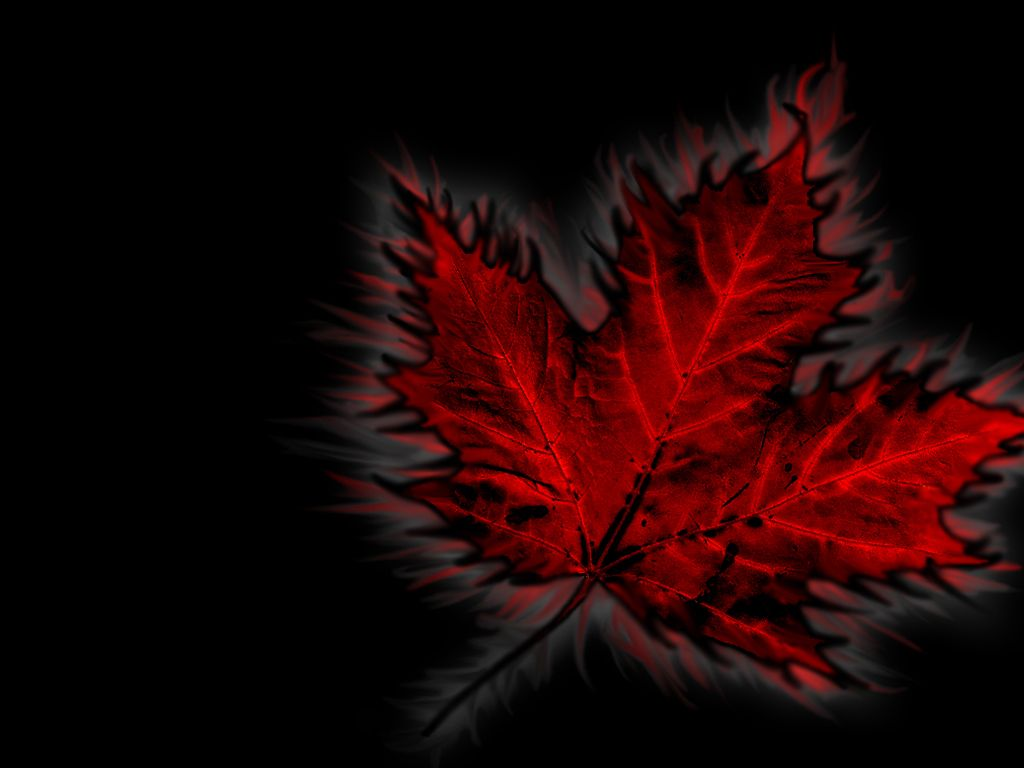 maple leaf canadian wallpapers cka military