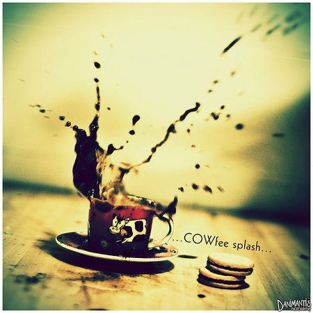 ...COWfee splash...
