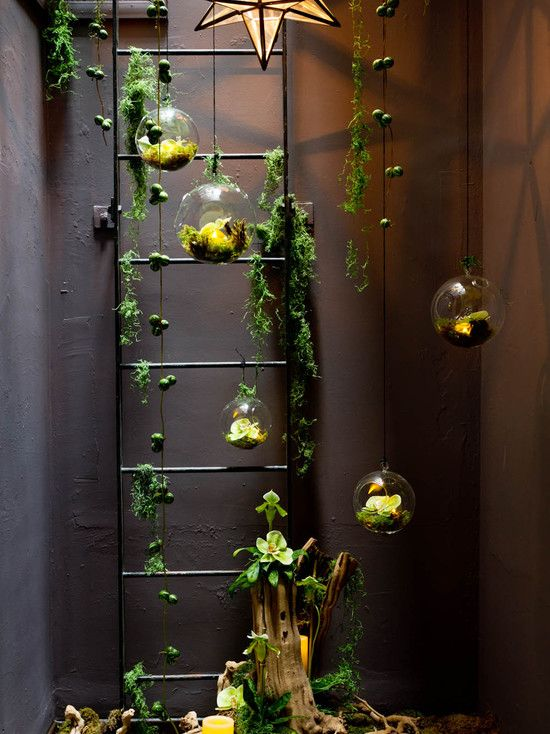 Air Plants Ideas:: Interesting Air Plants Hanging to Beautify Your ...