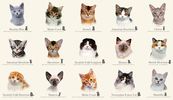 Equilter Cat Breeds Cluster Of Kittens Ivory 24 X 44 Panel Cat Breeds Cat Breeds Chart Types Of Cats Breeds