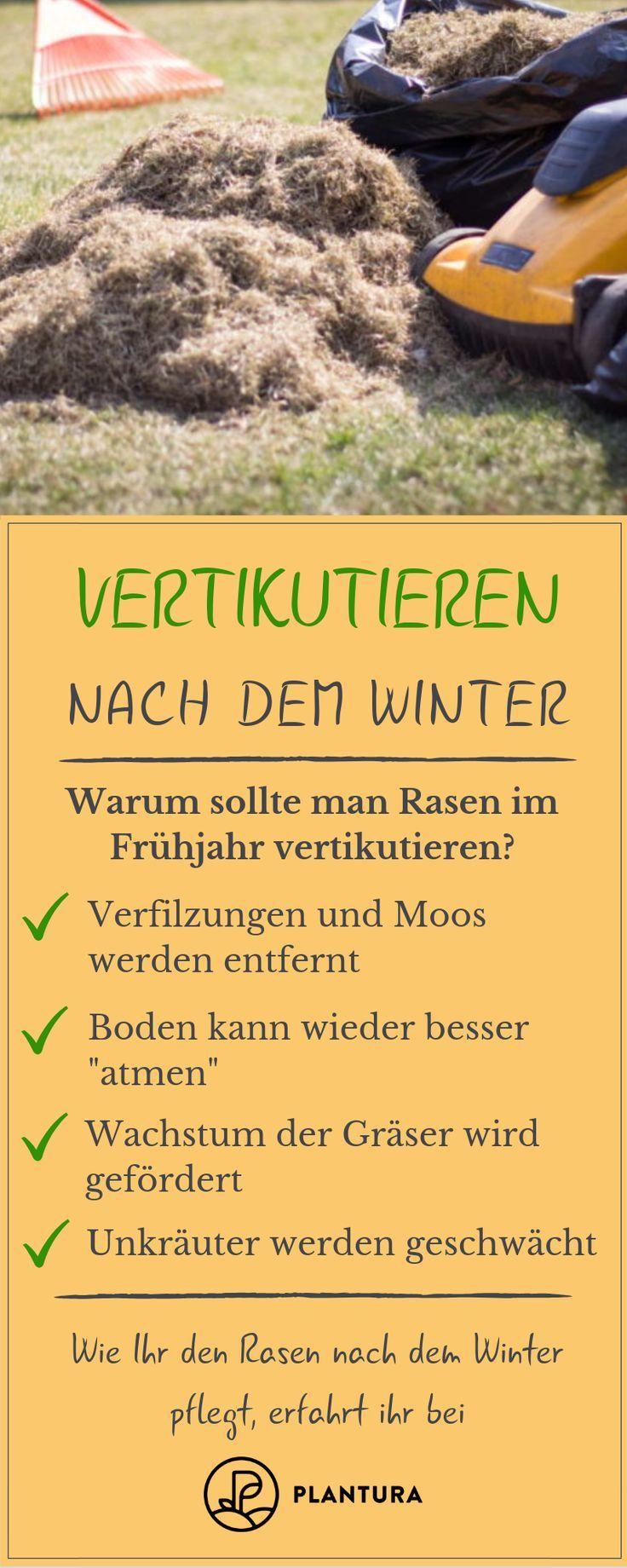Vertikutieren nach dem Winter: Der nach dem Winter geschwächte Rasen wird vergrößert ...-#dem #der #geschwächte #nach #Rasen #vergrößert #vertikutieren #Winter #wird #gemüsegartenanlegen