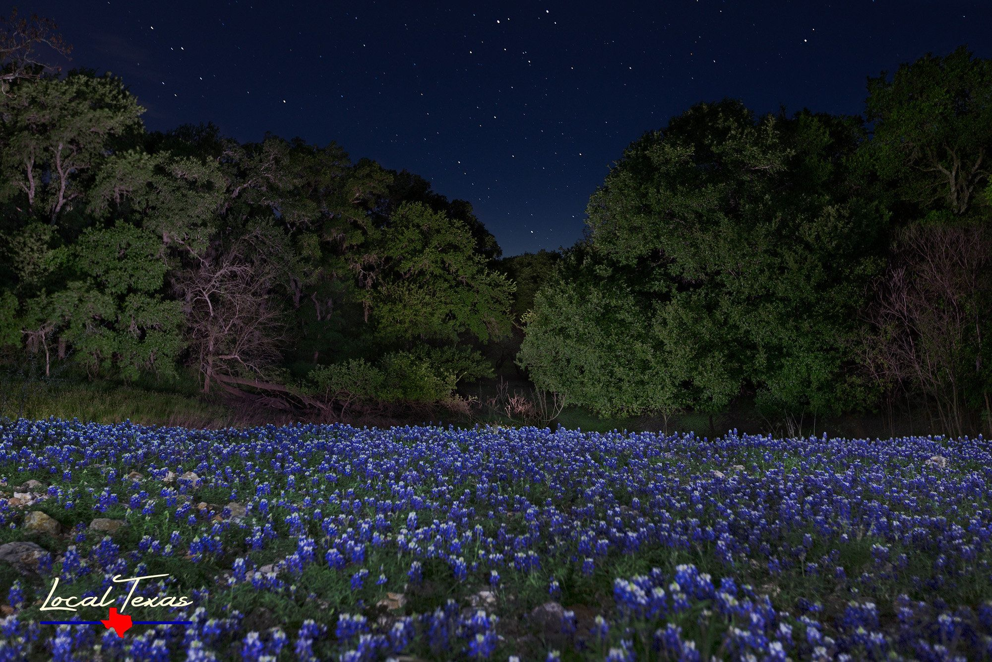 Bluebonnets Under The Stars Texas Wildflowers Hill Country Etsy Country Wall Art Nature Photos Blue Bonnets