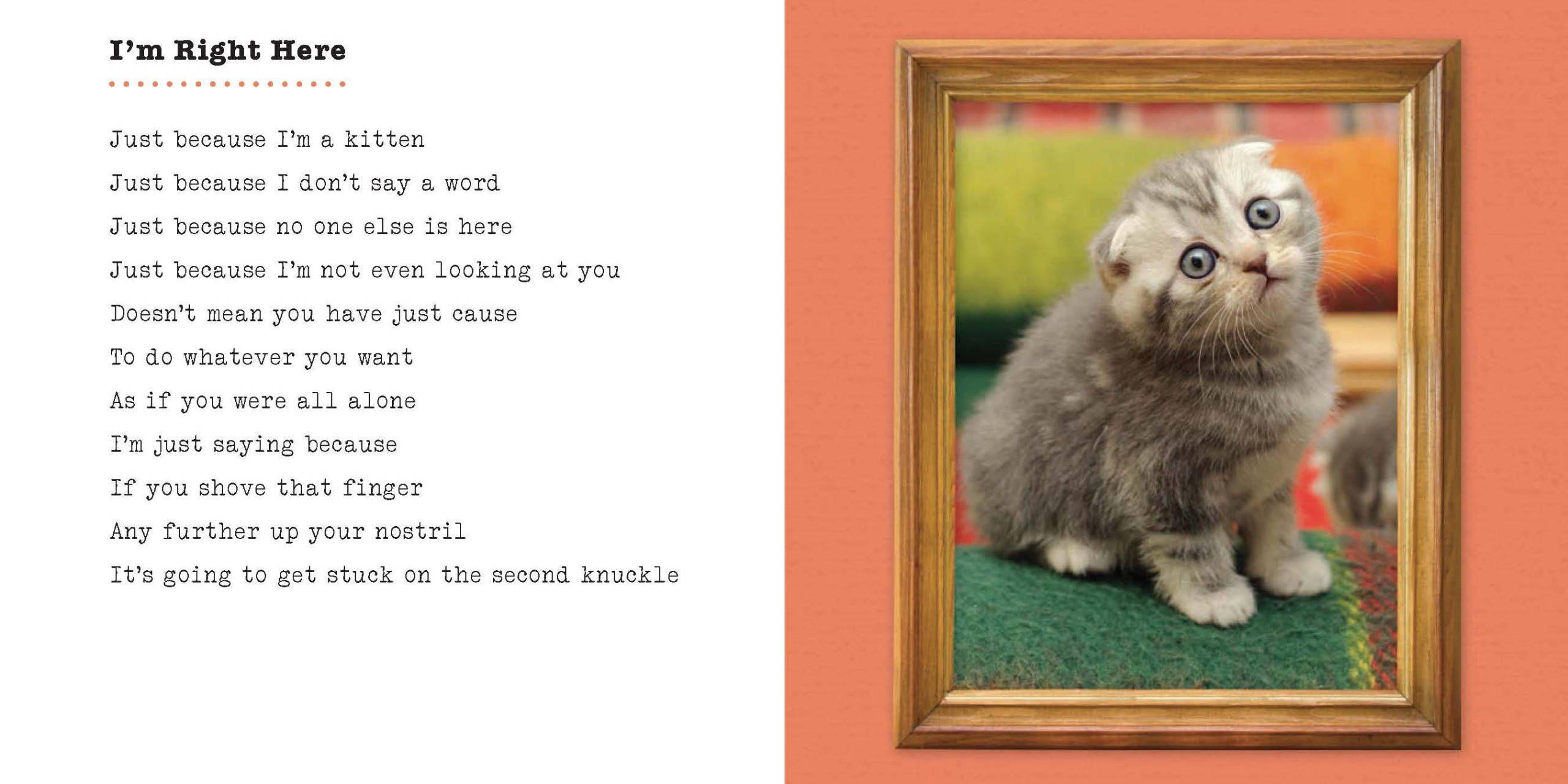 7 Cute Poems Written By Cats Cats Cute Kitten
