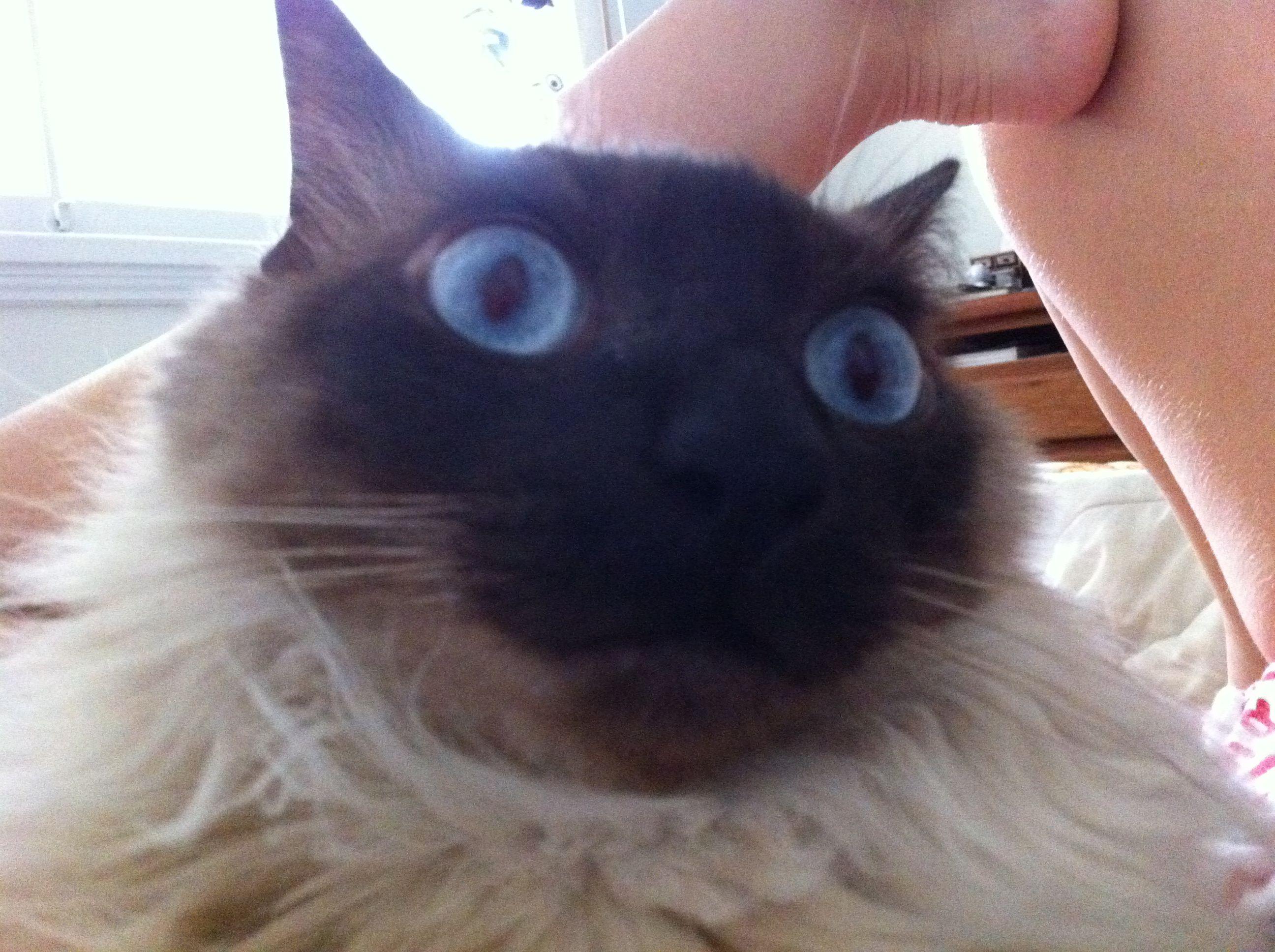 Whaaaat? Fernando Mango #cat