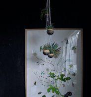 Chez vous: les plantes - Marie Claire Maison