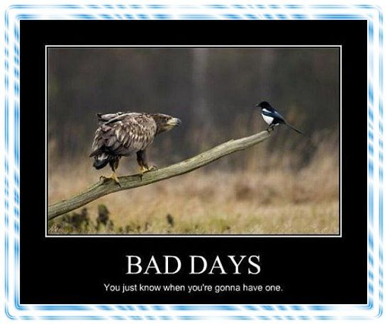 Funny Memes For Having A Bad Day : Having a bad day funny picture