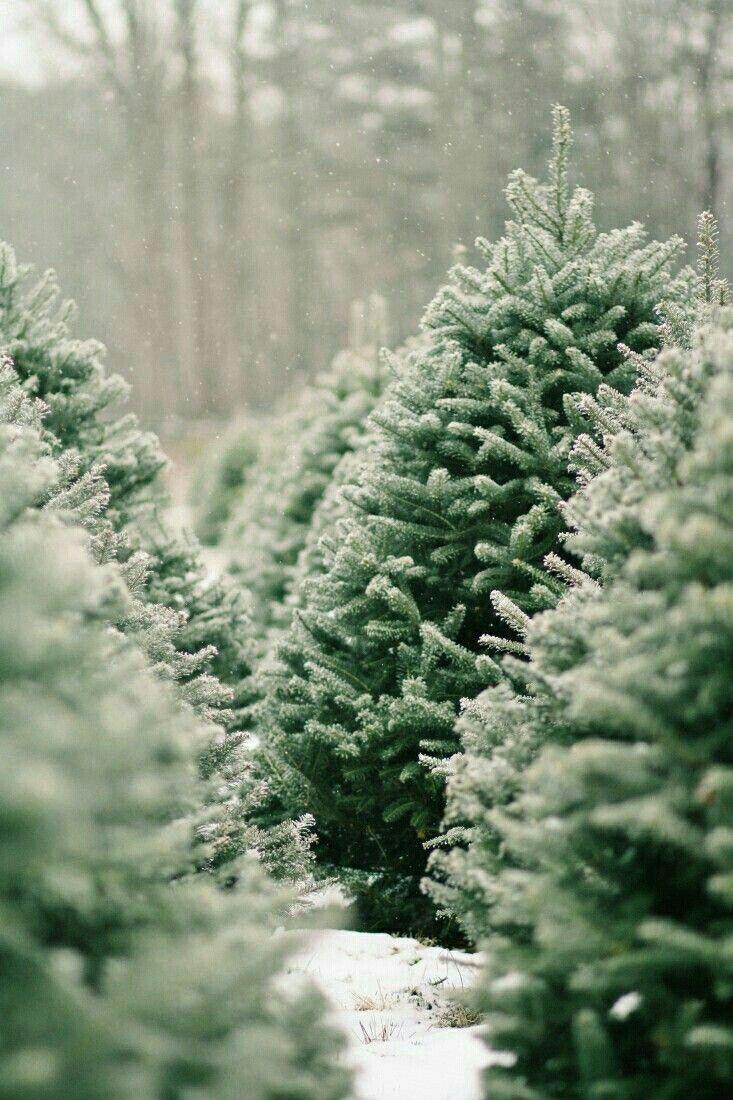 I loooove Christmas tree 🎄 farms. Like legit, go pick out & cut ...